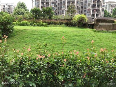 凤凰湖片区底跃大六房,凤凰世纪城户型稀缺,适合一大家人居住,送2个花园